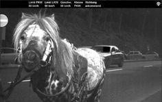 Άλογο πιάστηκε να πηγαίνει με 59 χλμ/ώρα