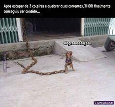 Como parar um cachorro com uma força descomunal