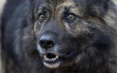La Justicia prohíbe que un perro ladre durante la noche
