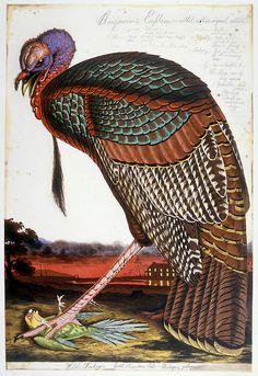 walton ford dominating bird