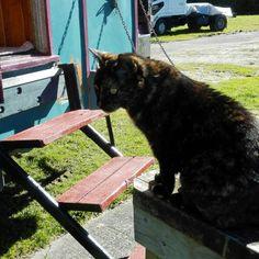 Sunshine at last Sunshine, Cats, Travel, Animals, Gatos, Viajes, Animales, Kitty Cats, Animaux