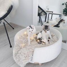 Cudownego i relaksu soboty wam życzę 🍁🍂 . . #😻 W razie pytań o legowisko są u @nookdesign.pl 😍❤️ . . #white #kochamyzwierzaki #cutecat Cat Bedroom, Home Bedroom, Girls Bedroom, Girl Bedroom Designs, Bedroom Ideas, Aesthetic Rooms, House Goals, Apartment Ideas, Home And Living
