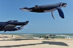 旅游热让东南亚海滩变污水坑这些海滩或暂关 Whale, Sports, China, Animals, Hs Sports, Whales, Animales, Animaux, Animal
