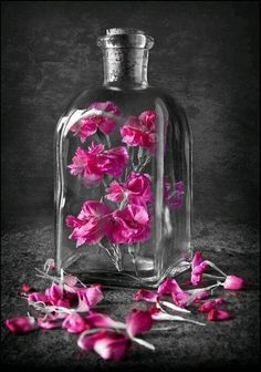 Color splash pink flowers in a bottle. Splash Photography, Color Photography, Pink Color, Color Pop, Color Splash Photo, Splash Of Color, Deco Floral, Foto Art, Everything Pink