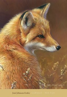 Curious: Red Fox  Art Print  by Joni Johnson-godsy