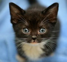 Maggie, foster kitten from Tonis Kitten Rescue:  W/ a face like this, she'll end up getting everything she has ever wanted!
