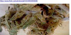 2016 Cannabis Research Studies