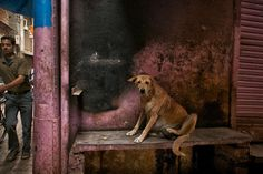 Itchy Dog by Glenn Capers