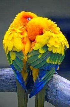 loros,con mucho color