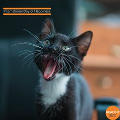 Wildlife Photography, Animal Photography, International Day Of Happiness, Video Chat, Healthy Pets, Cat Day, Cats And Kittens, Funny Kittens, Mammals