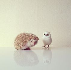 mrwonderful_darcy_the_flying_hedgehog_erizo_026