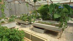 Gardening Australia - Fact Sheet: Gardening With Fish