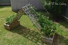 Another idea for making a bean hut.  For over the back patio