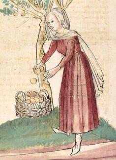 15th c. Konrad von Megenberg Das Buch der Natur — Hagenau - Werkstatt Diebold Lauber, um 1442-1448? Cod. Pal. germ. 300 Folio 243v