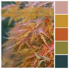 Autumn Color Palettes | Family Home and Life: Fall Color Palette