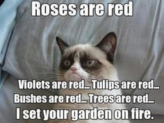 Everything is red because Grumpy Cat is an arsonist.
