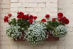 10 πανέμορφα φυτά για ζαρντινιέρες που ομορφαίνουν το μπαλκόνι! Plants, Garden Decor, Planting Flowers, Home And Garden, Garden Plants, Flowers, Flower Garden, Diy Garden, Backyard