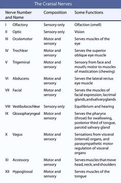 cranial nerves list