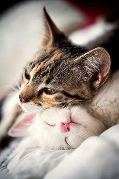 Awww.. Cuddly kitties❤️