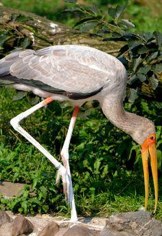 Awe Inspiring Birds  http://www.theenvironmentalblog.org/2012/09/awe-inspiring-bird-photos/