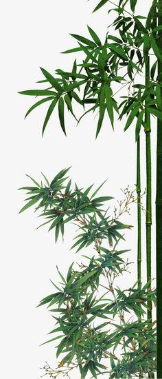 Green Bamboo imagen, Bamboo, Verdor, Green Bamboo Imagen PNG