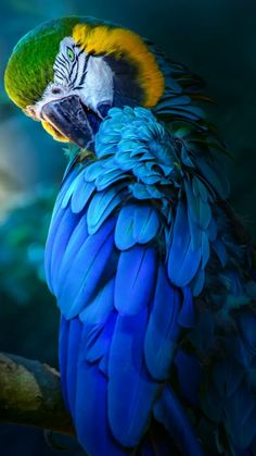 DanaMichele ♡ #photography #parrot #Blue ♡