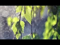 ▶ Best Ever Chinese Bamboo Flute Zen Relaxing Music Playlist- Over 2000 Likes - Meditation Spa Yoga - YouTube