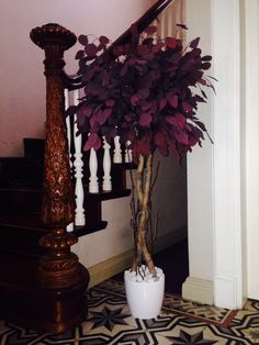 Стабилизированное дерево. Эвкалипт розовый