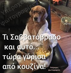 Funny Greek, Good Night, Weddings, Humor, Sayings, Pets, Amazing, Quotes, Animals