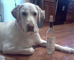 River Ridge Winery in Commerce Missouri.Lucky Dog Wine Still laughing! White Wines, Wineries, Funny Photos, Missouri, Captions, Vodka Bottle, Laughing, Drinking
