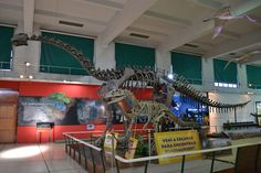 Natural History Museum, Buenos Aires, Argentina