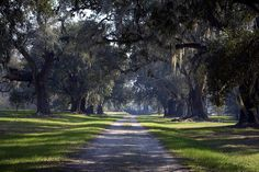 Limerick Plantation - Francis Marion National Forest - South Carolina - 07 March 2009 by goatlockerguns, via Flickr