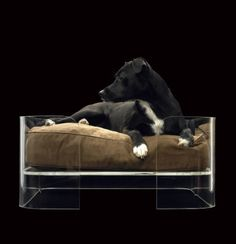 Perspex pet bed 3