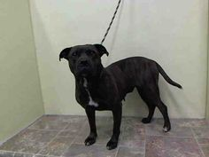 SAFE --- Manhattan Center    MAMA - A1001372    SPAYED FEMALE, BROWN, PIT BULL MIX, 2 yrs, 4 mos  STRAY - STRAY WAIT, HOLD FOR ID  Reason STRAY   Intake condition NONE Intake Date 05/29/2014, From NY 10304, DueOut Date 06/01/2014 https://www.facebook.com/Urgentdeathrowdogs/photos_stream