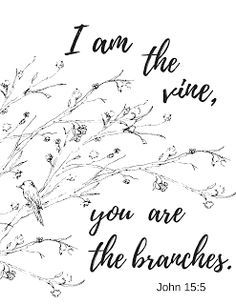 I am the vine, you are the branches John 15:5 Get the printable coloring page at theprudentpantry.com