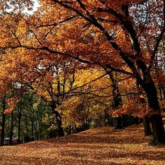 Tym razem piękna złota jesień w Słupsku #slupsk #Poland #stolp #jesien #zlotapolskajesien #autumn #autumnleaves #autumncolors #igersgdansk #igerspoland #mobilnytydzien105 #ig_today #ig_worldclub #ig_great_pics #lubiepolske #polskajestpiekna #apnow #artystycznapodroz #jeszczejesien #tv_pointofview #Xperia