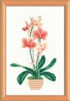 1161 Желтая орхидея