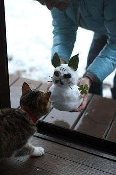 kitty meets kitty snowman