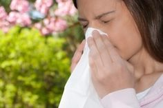 Global warming will cause increased pollen levels and more severe allergies, a UMass study has found.
