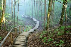 Love being outdoors? Choose this made to measure Foggy Forest Stairway wall mural. Free delivery to eurozone destinations within 3 to 5 working days. Forest Wallpaper, Photo Wallpaper, Wall Wallpaper, Foggy Forest, Forest Pictures, Library Images, Stairways, Nature Photos, Wall Murals