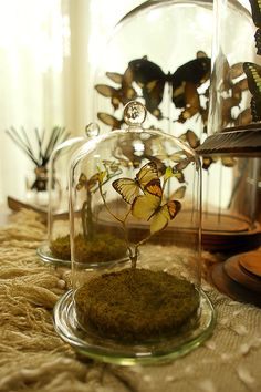 Butterflies in glass dome.