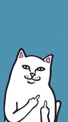 Image about cat in W A L L P A P E R S by Finy