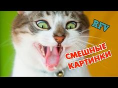 Самые смешные приколы #4 ∙  Прикольное видео 2015 ∙ Funny Video Compilat...