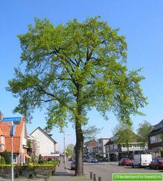 (Amersfoort, Leusderweg) in deze afbeelding is duidelijk te zien hoe het groen is geplaatst in de straat op de stoep.