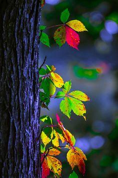 Hojas multicolores
