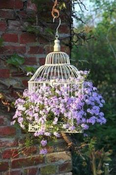 Old metal bird cage as a trailing plant hanger