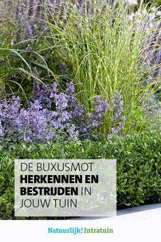 Iedereen met een buxus in de tuin vreest ervoor; de buxusmot. Wij vertellen je hoe je de buxusrups en -mot herkent en hoe je ze kunt bestrijden. Modern Garden Design, Chenille, Garden Pests, Outdoor Gardens, Moth, Eco Friendly, Home And Garden, Exterior, Flowers