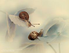 Friendship - Pinned by Mak Khalaf Macro african snailflowerflowershydrangeamacrosnailvintage by jeverz