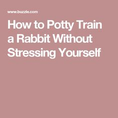 How to Potty Train a Rabbit Without Stressing Yourself