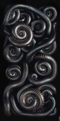 the cinder fields — Millipedes by photographer Tim Flach